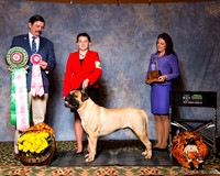 Nationals Best Junior Handlers