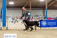 Best in Show Saturday