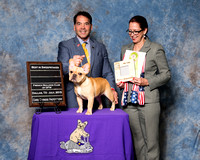 French Bulldog Club of DFW Win Proofs