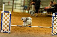 Bell County Obedience and Agility Trial April 2016