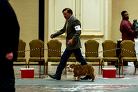 1 Div IV Dog Classes