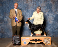 Sunday Breed Judging Win Previews