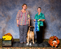 3 ABA Natls Obedience Win Previews