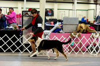 Sat AM Best of Breed Candids