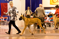 Houston World Series of Dog Shows 2014