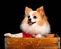 Houston World Series of Dogshows 2016