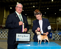 BCKC Thursday Breed Judging Win Previews Part 1