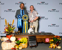 Natl Show Obedience and Rally Win Previews