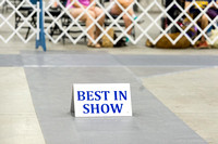 Best in Show Judging Sunday Candids