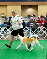 Canaan Dog Gale
