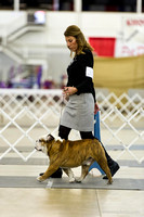 Bulldog Specialty Candids Veteran and Breed Judging